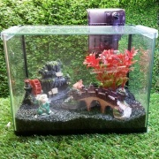 Glass Tank Set (M)