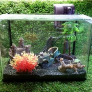 Glass Tank Set (L)